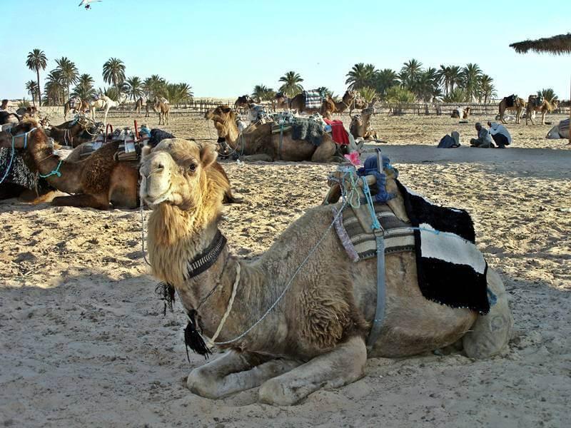 Поездка в Сахару.
