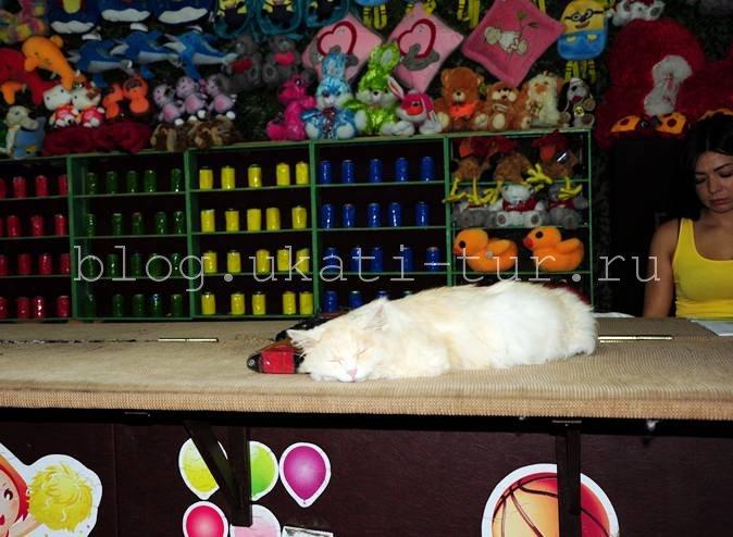 Пострелять...кот спит