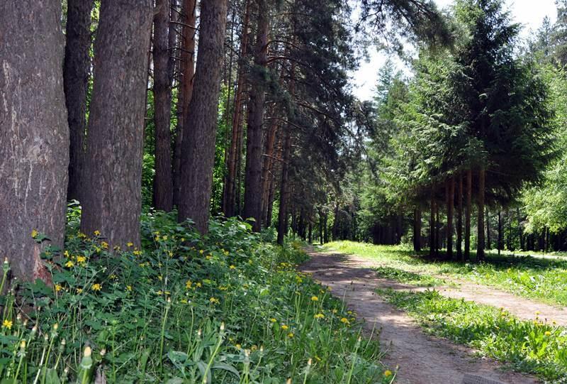 сад лесоводов