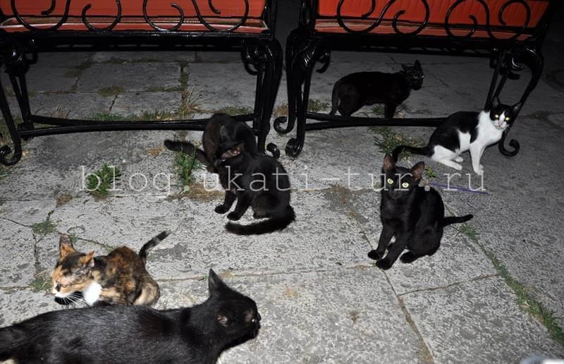 коты в Пицунде