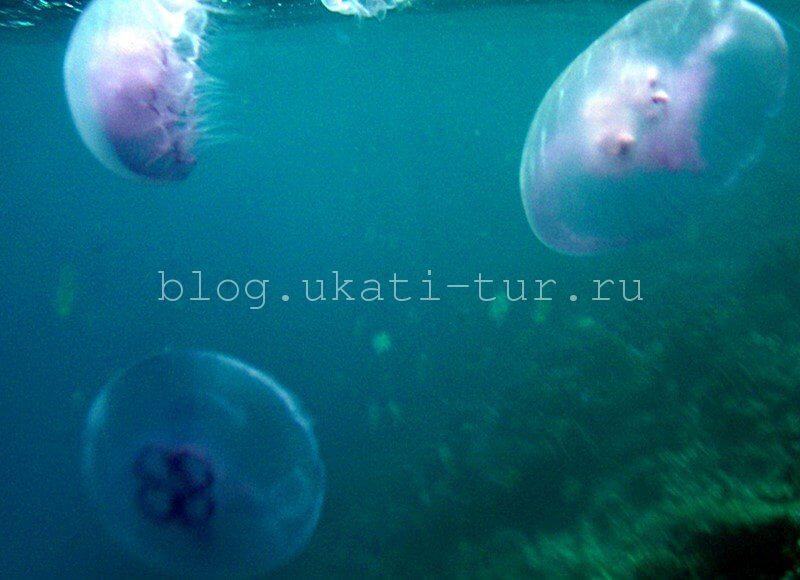 meduzy