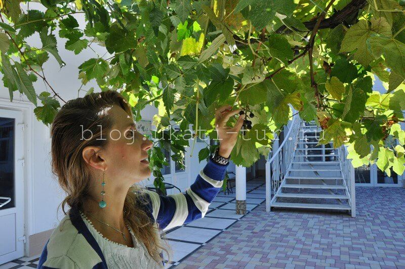galinka_vinograd