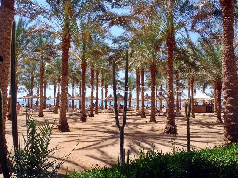 seti_beach