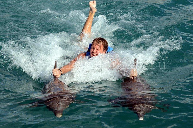 za_delfinami