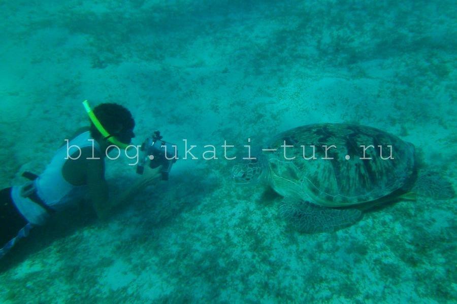 Черепаха 3