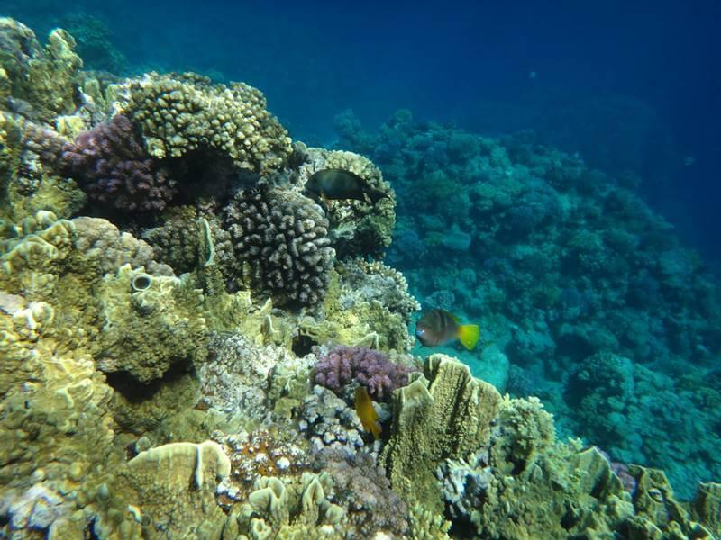 подводный мир Мелия